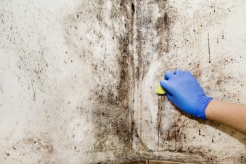 how to know if you have mold in your house