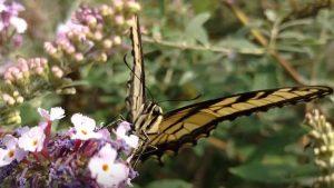 All-A-Flutter Butterfly Farm