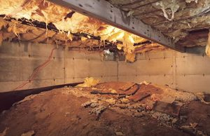 Mold in Wet Crawlspace Hero Mold Company Reidsville NC